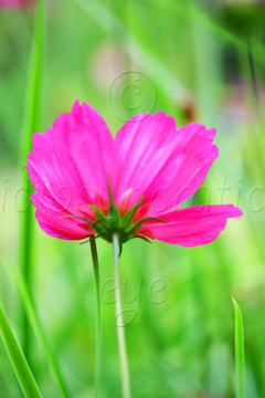 Pink Flower Portrait