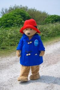 Paddington Bear - Charity Mascot in Costume