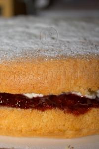 Sponge Cake Closeup
