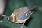 Beak Swipe