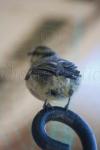 Birdy Behind