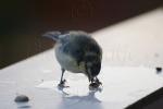 Eating Proper Bird Food