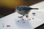 Preparing to Throw Bird Food at Neighbours
