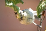 Tasty Tomato Plant