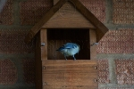 Trying Out the Birdbox