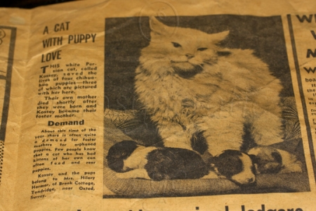 1964 - Cat with Puppies