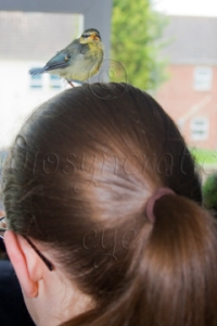 Being a Bird Parent - Blue Tit Baby on Head