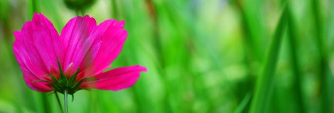 Bright Pink Flower Against Bright Pink Grasses